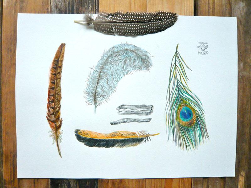 blog, veren, foto, illustratie